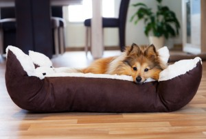 Domestic cleaning for pets
